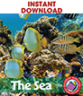 The Sea Gr. K-1 - eBook