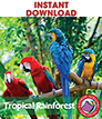 Tropical Rainforest Gr. K-2 - eBook