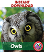 Owls   Gr. 2-6 - eBook