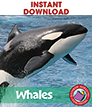 Whales Gr. 2-3 - eBook