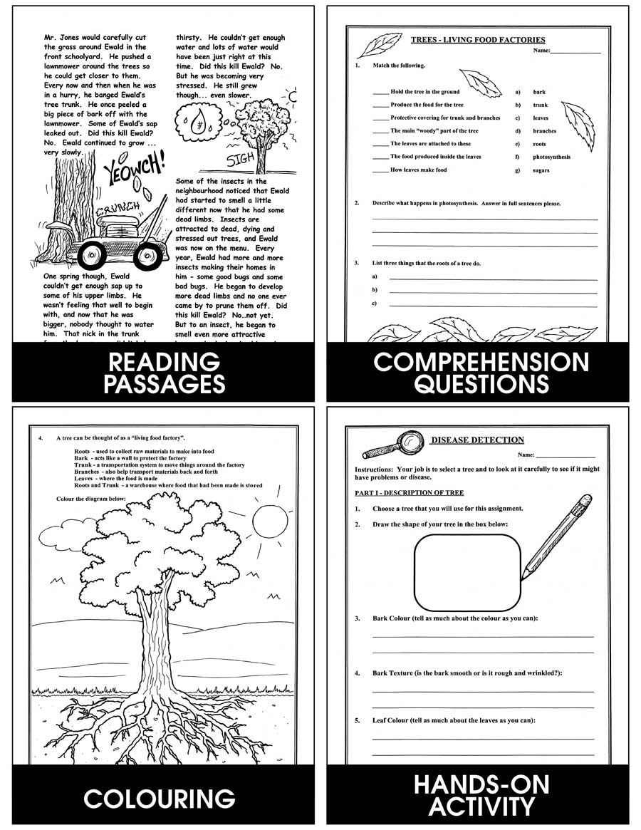 Canadian Trees & The Urban Forest Gr. 4-6 - eBook