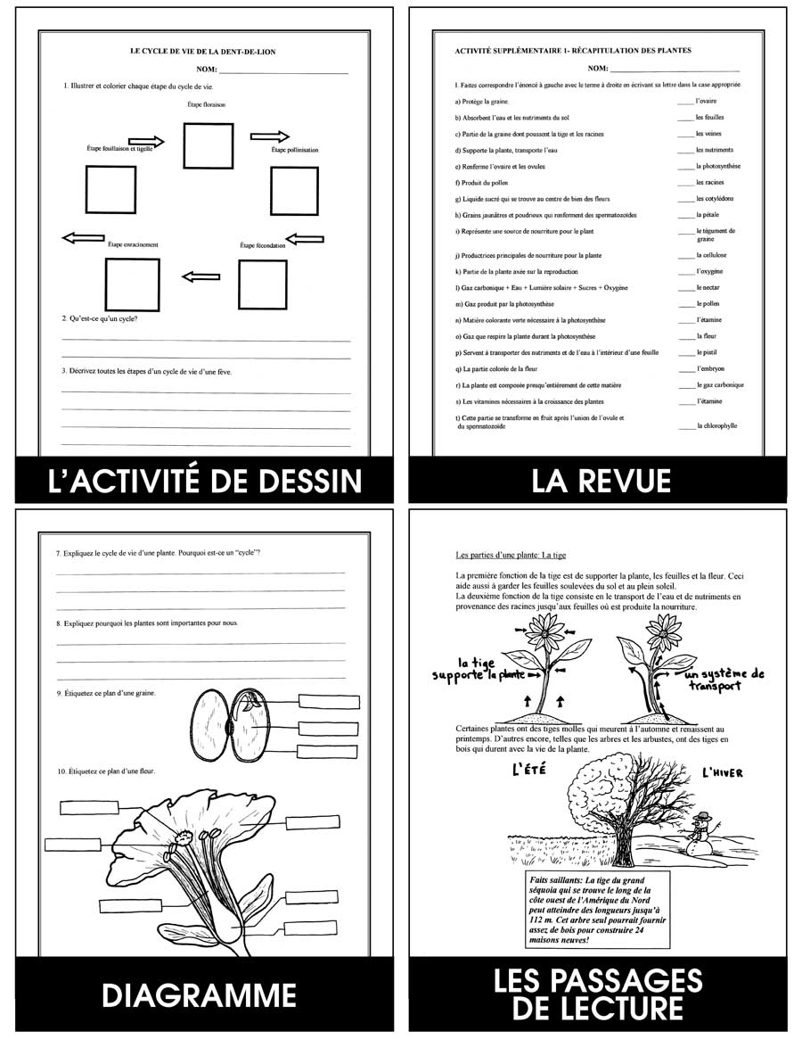 Les Plantes Gr. 4-5 - eBook